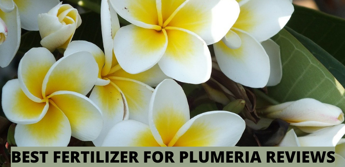 BEST FERTILIZER FOR PLUMERIA REVIEWS