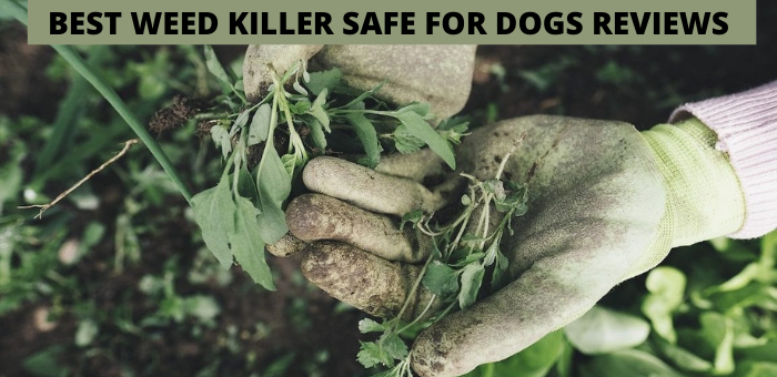 BEST WEED KILLER SAFE FOR DOGS REVIEWS