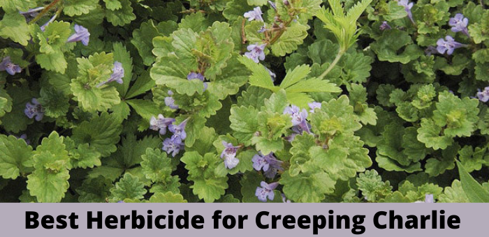 Best Herbicide for Creeping Charlie reviews