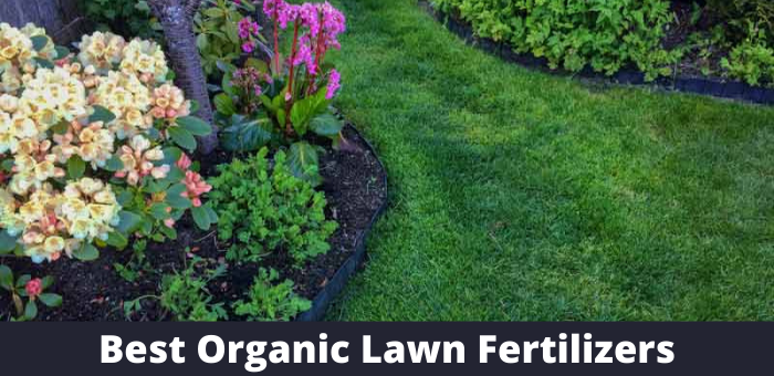 best organic lawn fertilizer reviews